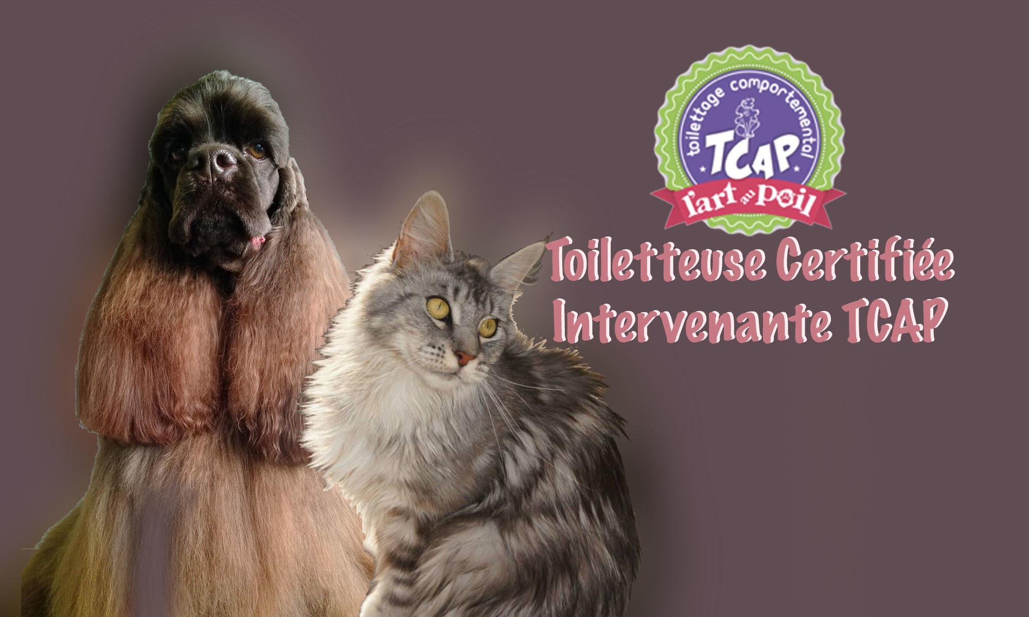 ❧ Institut de toilettage Alt'O Poil ☙   03 27 80 73 40